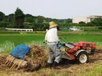 2012_0617ichigao0041.JPG