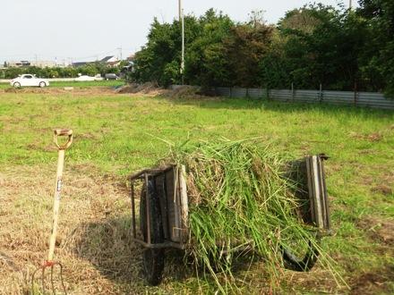 2012_0617ichigao0050.JPG