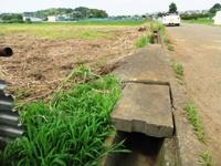 2012_0618ichigao0007.JPG