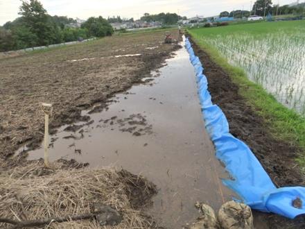 2012_0620ichigao0007.JPG