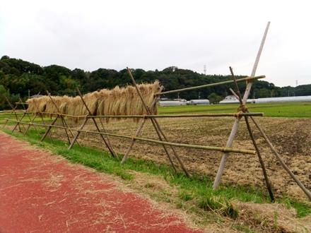 f2012_1014kozaki0003.JPG