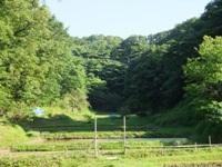 f2013_0524namakemono0015.JPG