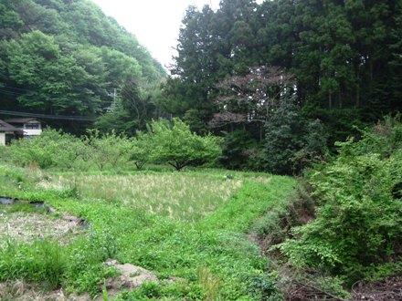110507taokoshi_001.JPG